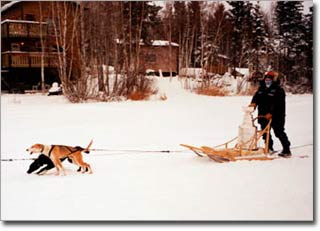 The Stanley Cup travels by dogsled.